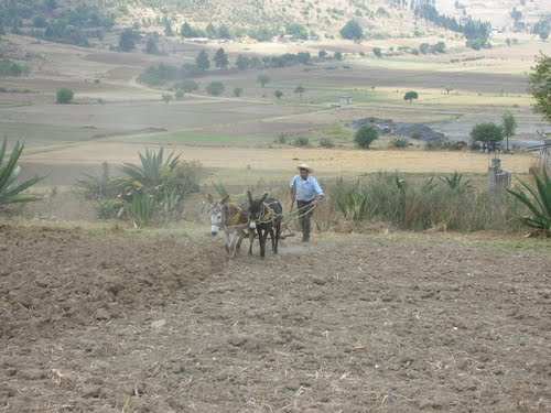 Calixtlahuaca - Man plowing an ancient Aztec field with donkeys - May 2007